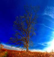 Panorama 3509 hdr pregamma 1 mantiuk06 contrast ma by bruhinb