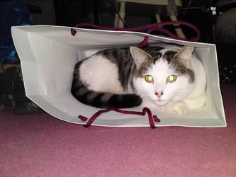 Cat within a bag by kay-of-doom