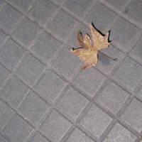 leaf me alone by babbuleone