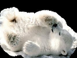 Baby Polar Bear by Pastelmm
