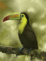 toucan painting by Leen-galeas
