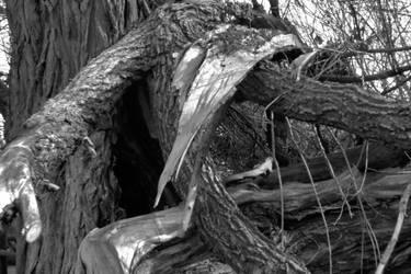 Tree by Urmar
