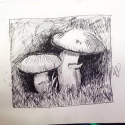 .:Pen and Ink:. Mushrooms by TheWayLifeShouldBe
