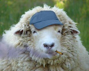 Cighat Sheep by dox111