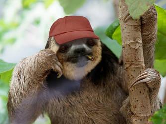 Cighat Sloth by dox111