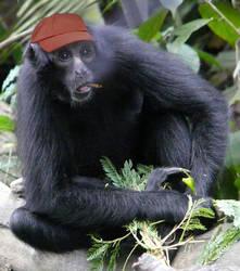 Cighat Spider Monkey by dox111