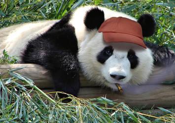 Cighat Panda by dox111