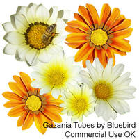 Gazania Tubes by Bluebirdofhappiness