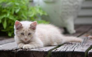 Barn Kitten 010 by deathbycanon-stock