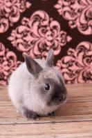 Bunny 1 by deathbycanon-stock