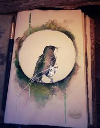 Starling by Kinko-White