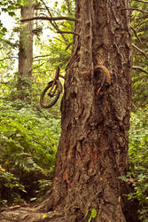 Bicycle Tree by verymoon