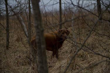 Cody, Stalking in the Woods by verymoon