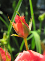 Bloomer by Lisa99