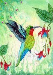 Hummingbird by dragonflywatercolors
