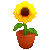 Sunflower 2 by Grumppuppi