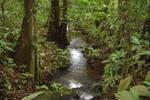 French Guiana Jungle by Kracoucas