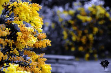 Yellow by ThatScalieThing