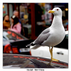 City Gull by jevigar