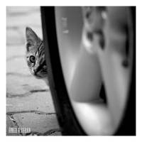 Stray Cats in Istanbul - III by jevigar