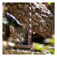 Stray Cats in Istanbul - IV by jevigar