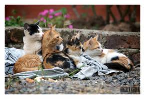 Stray Cats in Istanbul - V by jevigar