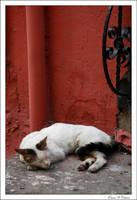 Uyuyan Beyaz by jevigar