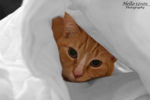 Good Night Kitty by hello-123456