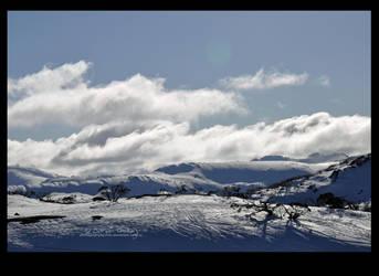 The Snow o5 by PhotographyByChilb