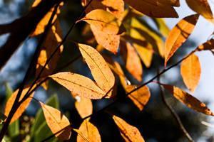Sunshine on Leaves by richardxthripp