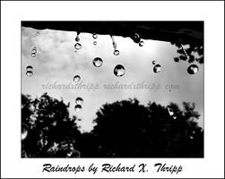 Raindrops by richardxthripp