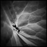 Somewhere in darkness by Soczi