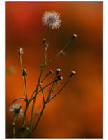 Only Love Autum by Soczi