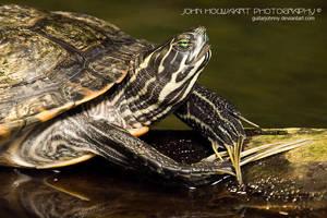 Turtle Krueger by guitarjohnny