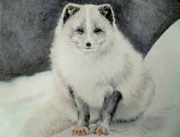 Snowfox :3 by fabienneeee