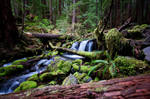 Sol Duc Falls Trail 01 by ThisJourney