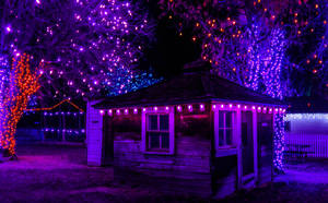 Old Shack All Dressed For Christmas by SerenAletheia