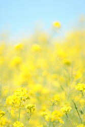 Flores del grelo by elminino