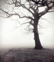 Solitude by Laysa