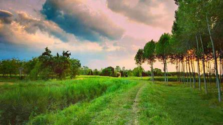 Nature by Laysa