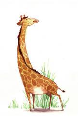 i like giraffes by neomonki
