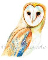 Barn Owl by katebird1994