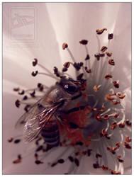 Let Me Bee by Kodi111