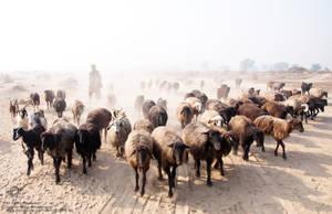 Balochi Caravan by aliawais