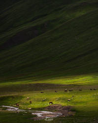 In Spotlight by aliawais