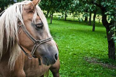 sad horse by GregorVicinus