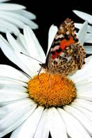 Butterfly Closeup by klikklakcz