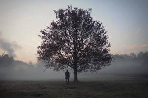 My Tree Of Life by smoozy