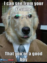 Dog Meme by Furrywolf79