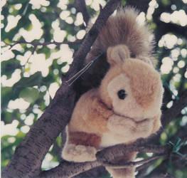 cute squirrel by mapishita